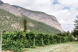 20190717_BC Wine Institute_Shuswap_Sunnybrae-8502