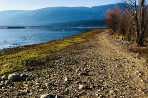 Image 3 Christmas Island at the Salmon Arm Foreshore Nature Trail _ Raven Trail